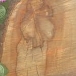 Икона Богородицы на срезе груши